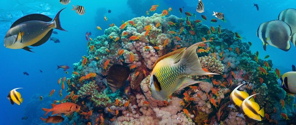 Coral fishes at Bahamas
