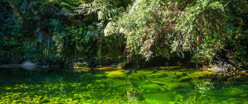 River in Abel Tasman National Park - New Zealand